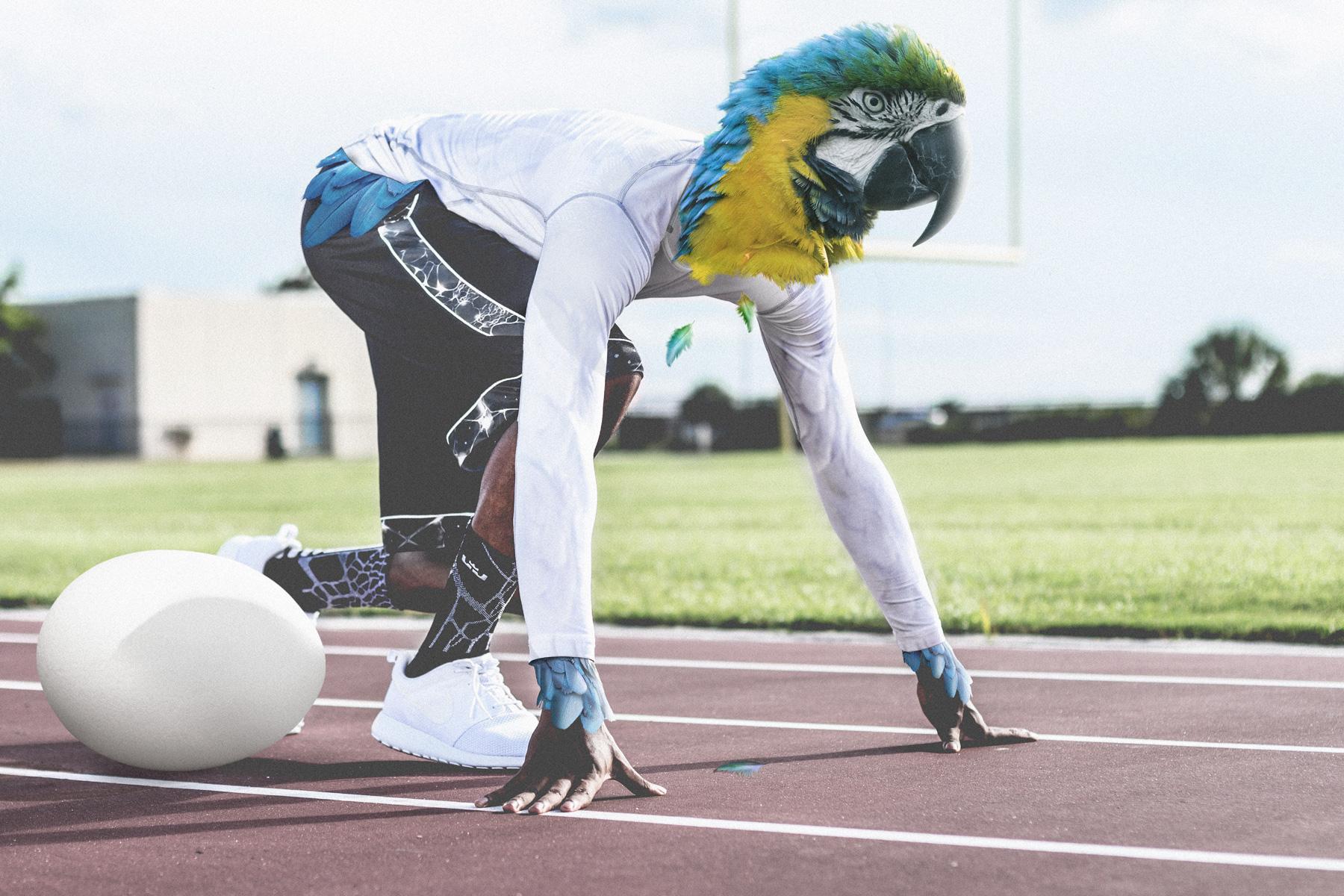 parrot runner