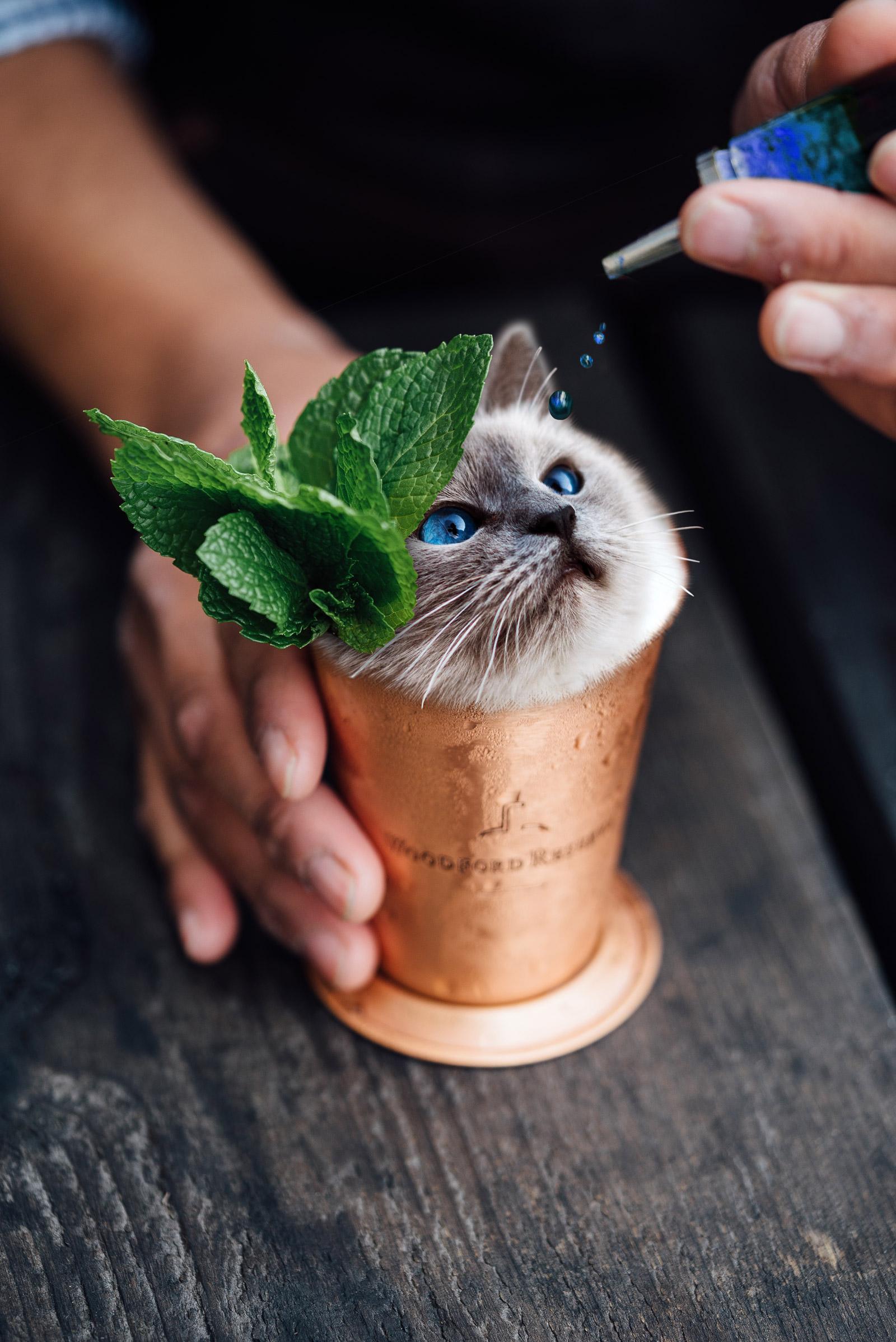 cup o cat