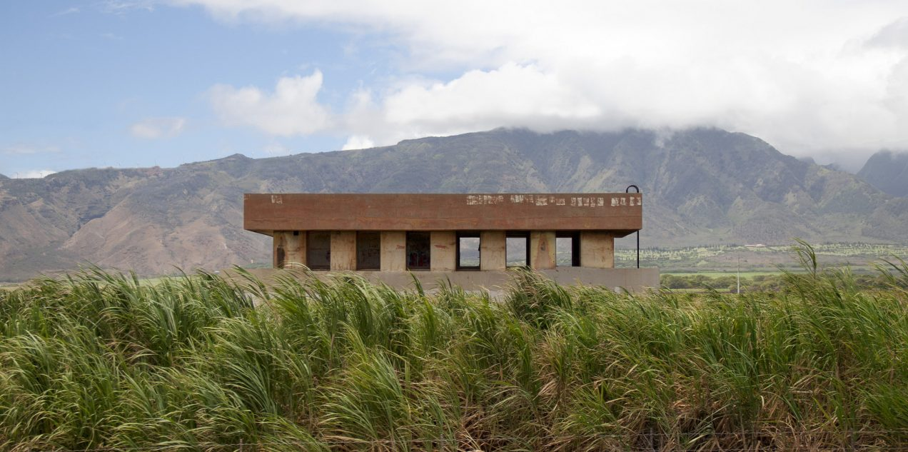 cane field building