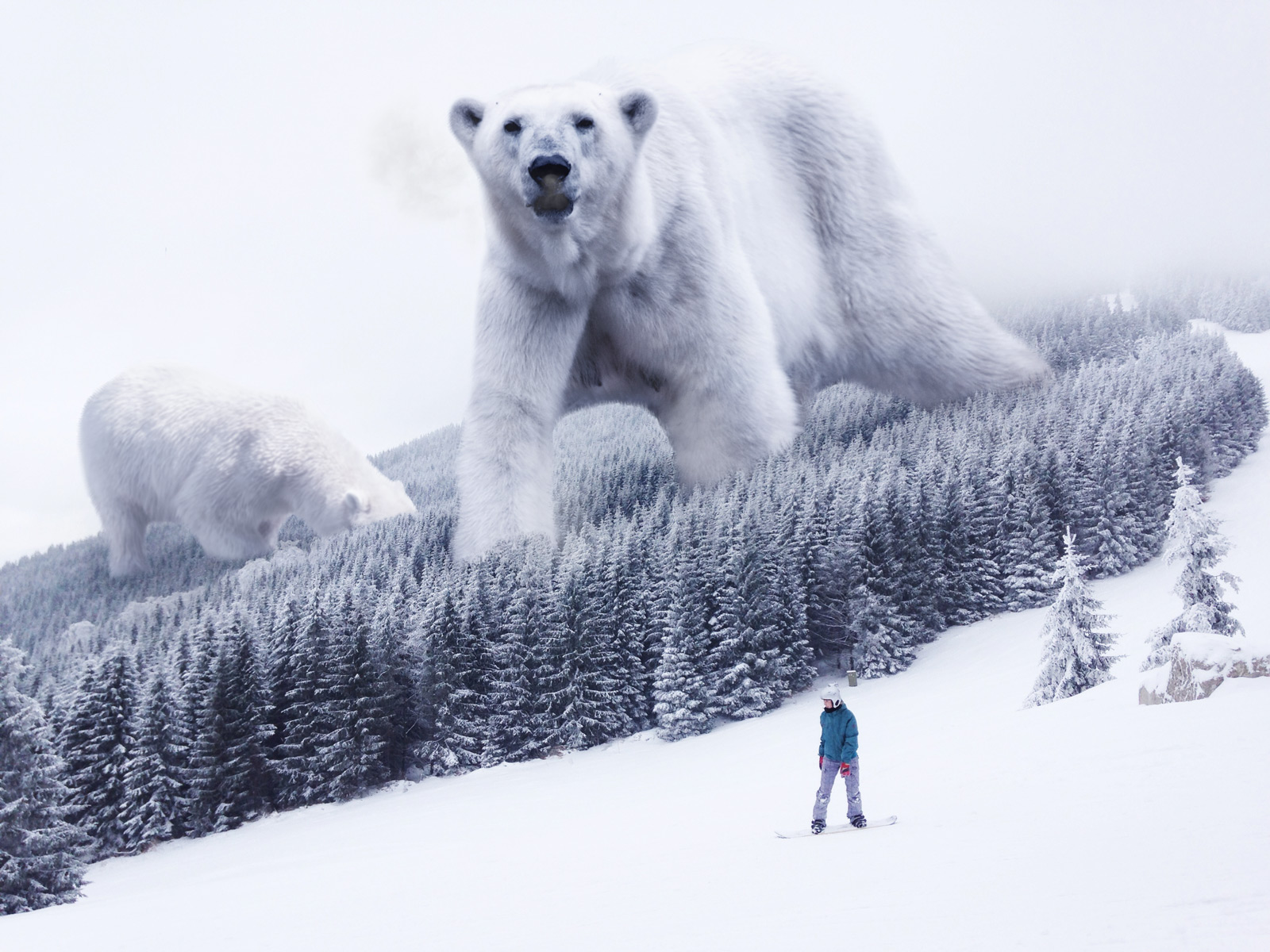 polar bear slopes